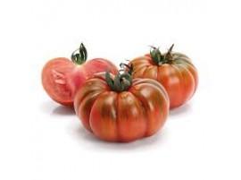 Pomodoro costoluto Bio