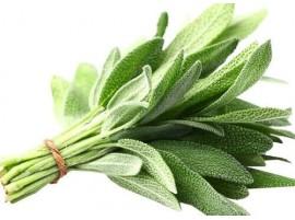Salvia Fresca biologica