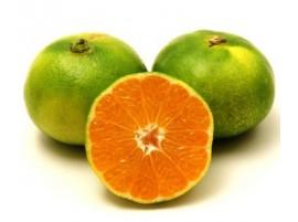 Mandarino Satsuma bio