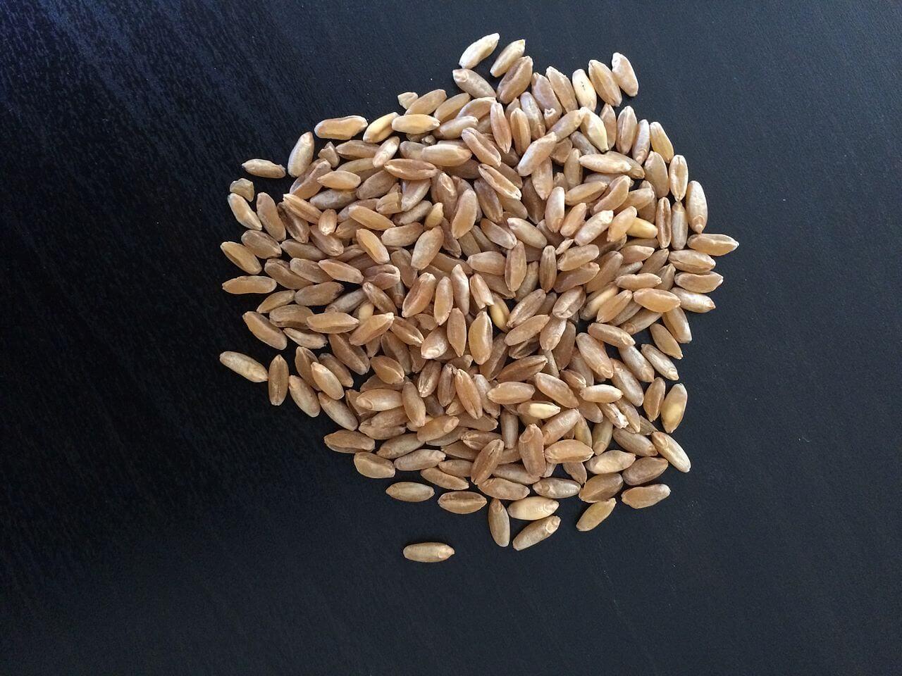 chicco di grano russello