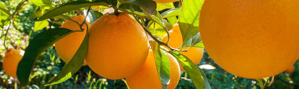 arance biologiche siciliane