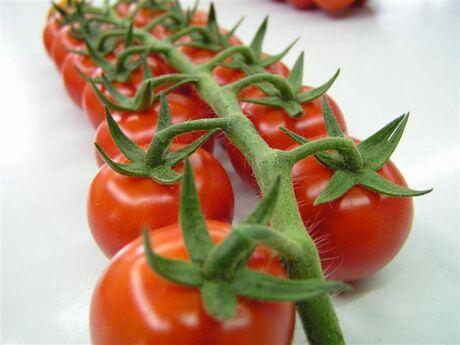 pomodorino biologico