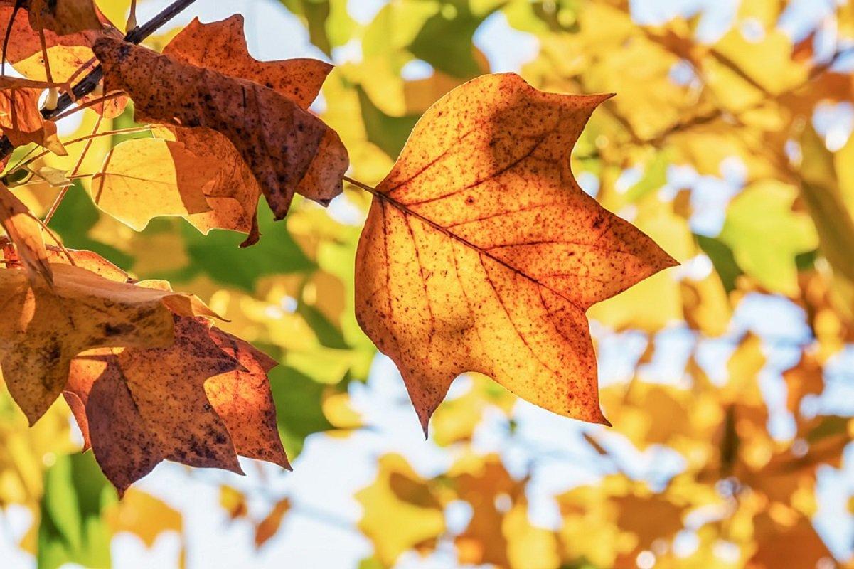 Alimentazione sana in autunno
