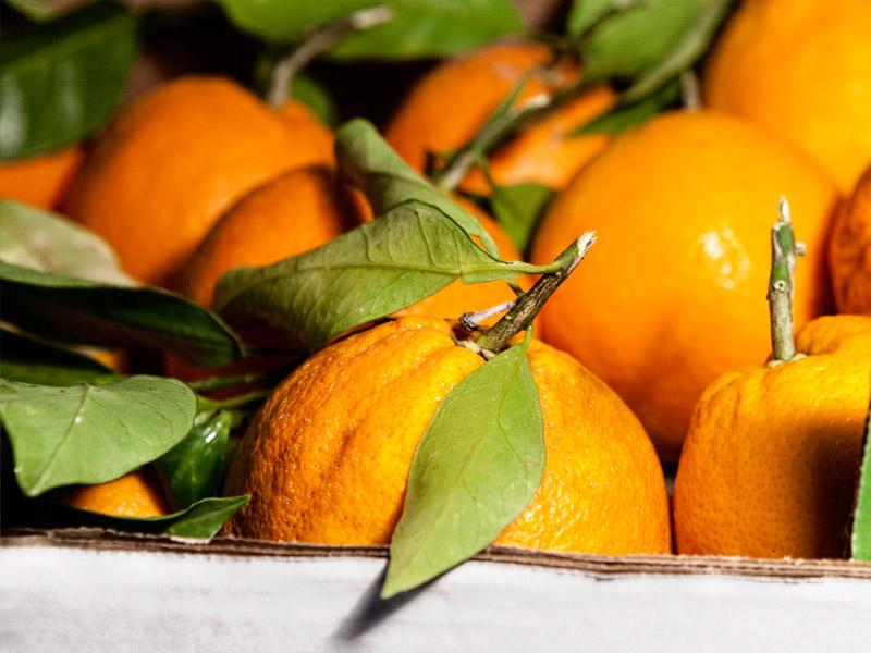 Arance: valori nutrizionali e benefici per la salute